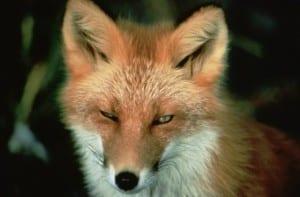 LTFS - The Clever Storage Fox