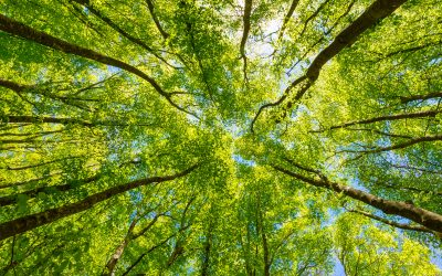 Reducing Carbon Emissions – How LTO technology can help save energy!